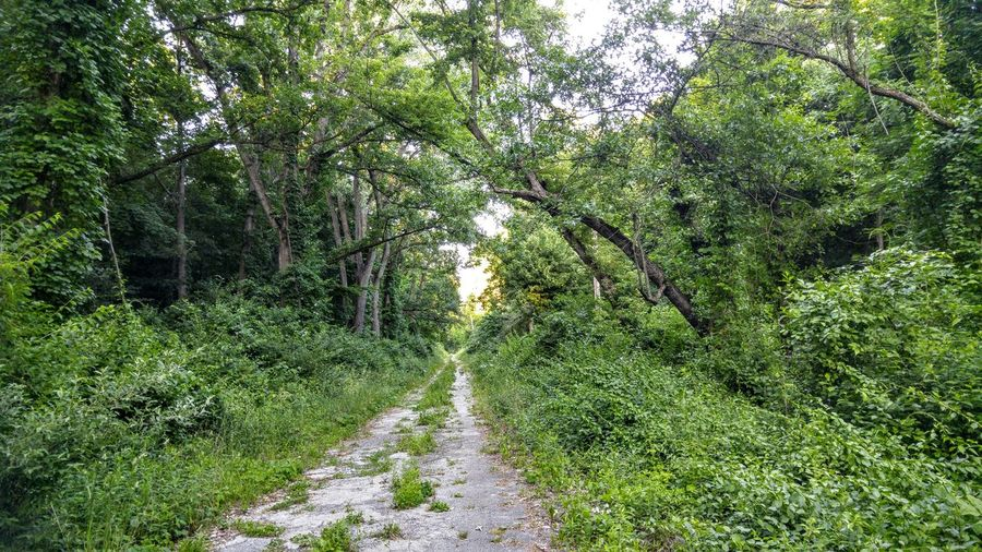 Forest Forestwalk Nature Taking Over Again Paths Reclaimed By Nature Reclaimed Road WoodLand Woods Lake Michigan