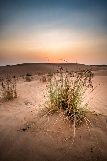 Clear Sky Grass Arid Climate Beauty In Nature Day Desert Landscape Nature No People Sand Sand Dune Scenics Sunset Tourism Tranquil Scene Tranquility Travel Travel Destinations