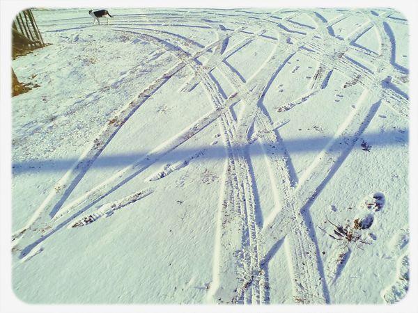 Surprisingly Unusual Cat😻 Snow earth