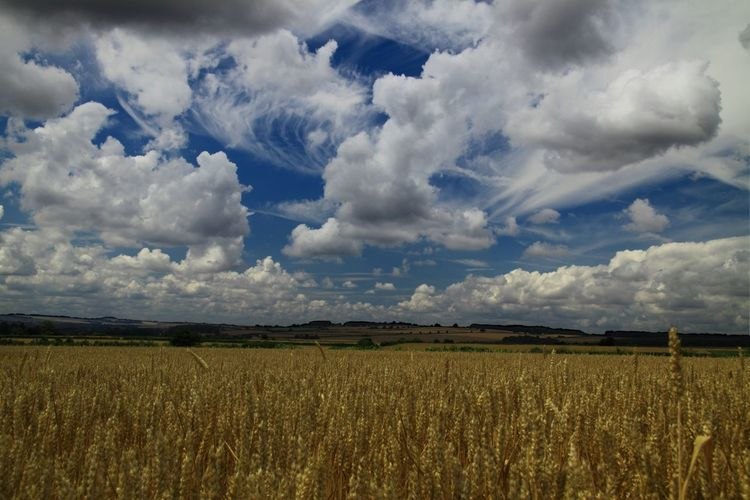 The Cotswolds Sky Rural Scene Non-urban Scene Outdoors Farmland Dramatic Sky Cloudscape Nature Field Cloud - Sky Beauty In Nature Wheat Fields Harvest harvest time Summer