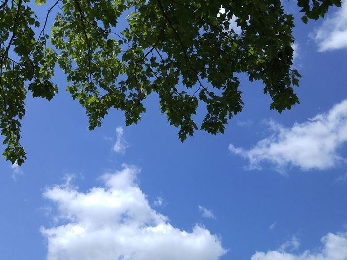 Under a tree at