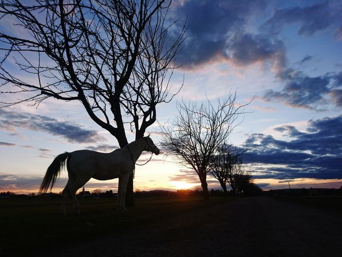Abendspaziergang 😊 Gerasdorf White Horse Nature I Love My Horse Safari Animals African Elephant Giraffe Dramatic Sky