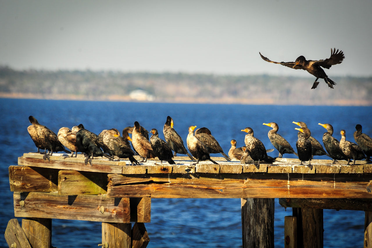 animals in the wild, bird, animal themes, animal wildlife, large group of animals, day, nature, outdoors, wood - material, perching, water, no people, beauty in nature, sky