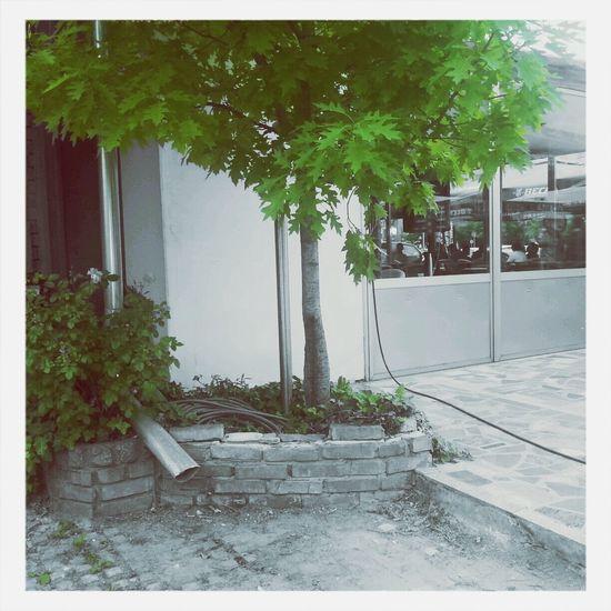 Picture taken by me in Belgrade, Serbia :) Taking Photos First Eyeem Photo