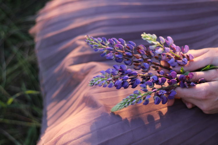Cropped image of hand holding purple flowering plant
