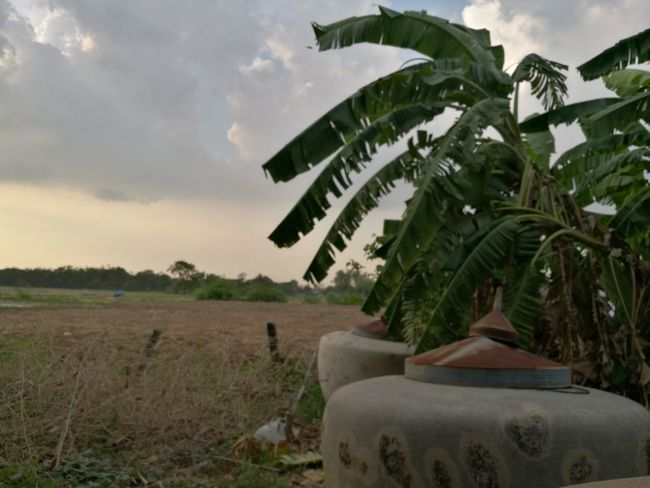 Cloud - Sky Tree Leaf Palm Tree Nature History Outdoors Agriculture Plant No People Growth Sky Day Banmo Saraburi Songkran Festival Myhome Relaxing Time Sunset Before The Storm Saraburi