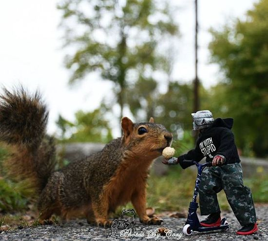 You'll never know the impact a small gesture of kindness will have untill you've given one. Funwiththesquirrels Luckywiththeanimals _tyton_ Itsjakefromsithfarm Krashes_502nd Krashes_kustoms Wildlife Animallover Wildlifephotography Wildlifepark Photooftheday Instadaily Instanature Natureshots Natureseeker Natureonly Natures_hub Natures_cuties Animallover Animal_captures Wildlife_perfection Feedback