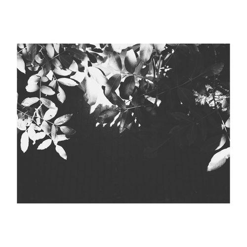 EyeEm Gallery Taking Photos EyeEm EyeEm Best Shots - Black + White