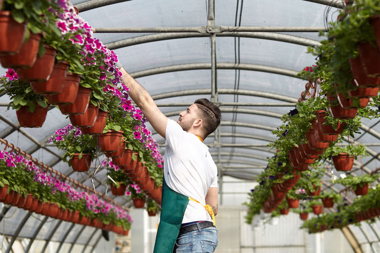 Young man smiling while standing by flower plants in green house