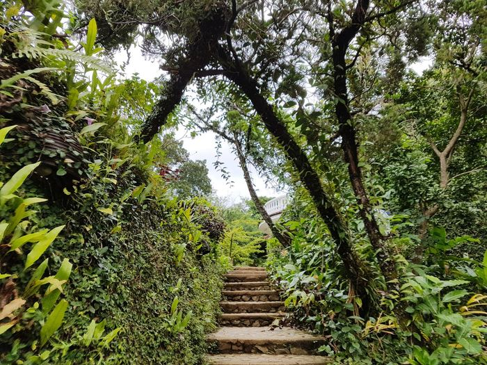 Path to Paradise Nature Green Color Tree Tranquility Steps And Staircases Outdoors Beauty In Nature No People