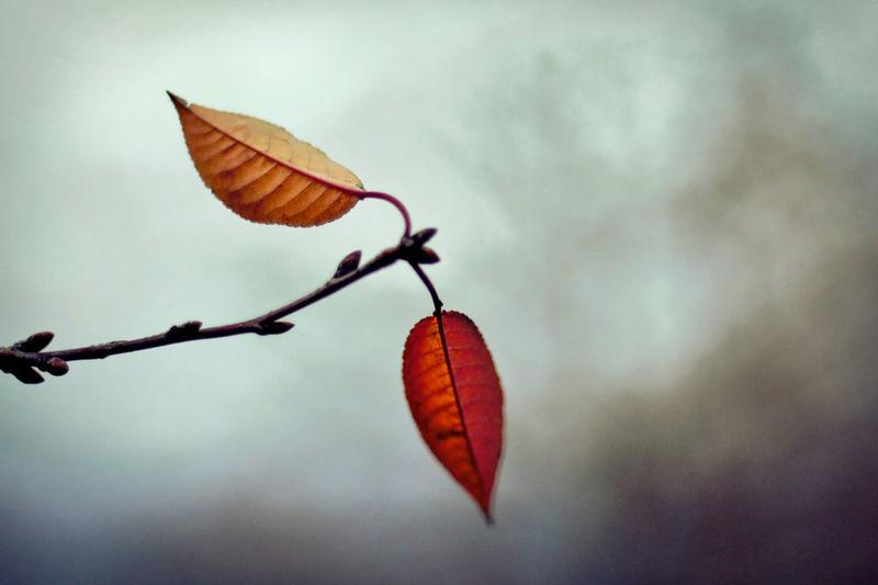 Autumn Blurred Background Branch Foliage Fragility Leaf