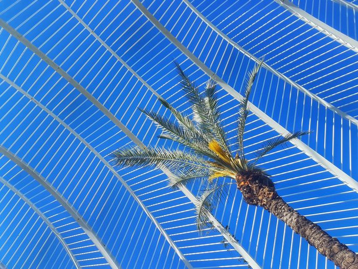 Palm Tree Palm Leaf Minimalism Minimalist Architecture Minimalobsession Minimal Tree Blue Backgrounds Pattern Modern Full Frame Close-up Architecture Architectural Design Architecture And Art LINE Architectural Feature Architectural Detail My Best Photo