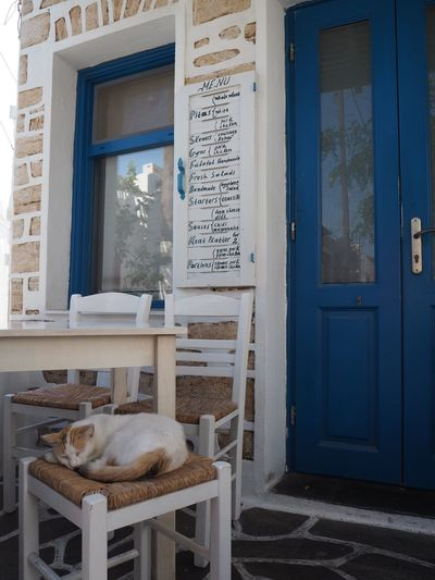 Welcome Restaurant EyeEm Selects Text Communication No People Entrance Architecture Door Cat Mammal Built Structure Domestic Cat Day Animal Themes Feline One Animal Animal Western Script Vertebrate Domestic Animals Domestic Building Exterior