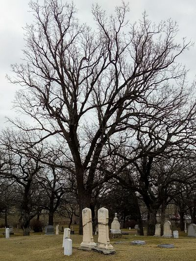 Tree Tombstone