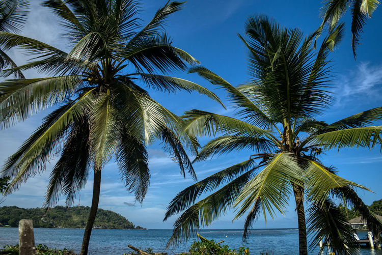 Palm trees by sea against sky