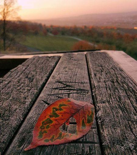 Love ❤ Autumn Love Autumnlove Sun Evening Enjoy Relax Time