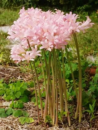 Flower Pink Color Plant Freshness Growth Close-up Petal No People Nature Beauty In Nature Springtime Fragility Outdoors Blossom Flower Head Day Grass