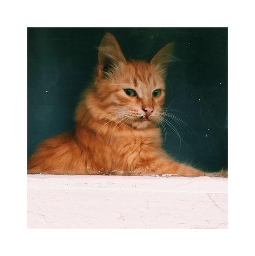 Domestic Cat Pets Domestic Animals Feline No People One Animal Day Portrait Animal Themes
