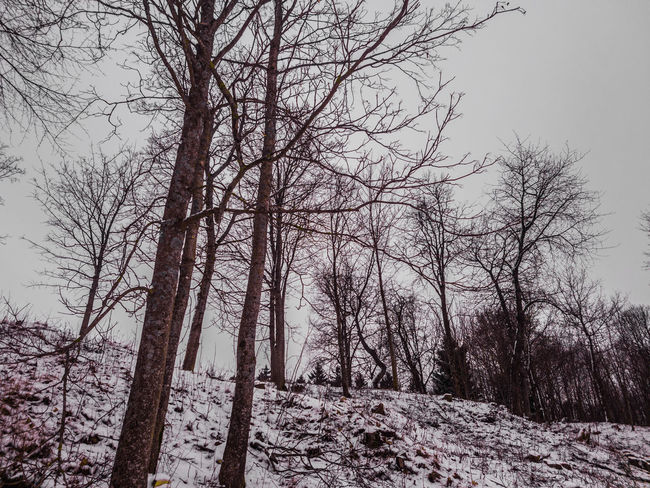 winter EyeEmNewHere Cloud - Sky Black And White Tree Low Angle View Nature Tree Trunk Branch No People Outdoors Day Forest WoodLand Beauty In Nature Winter Growth Sky Scenics