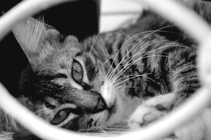 Cat 3 Cats Cats Eyes Cats 🐱 Cats Lovers  Domestic Animal Animals Domestic Cat Cat♡ Selective Focus Cute Cute Animals Cute Cats Cat Lovers Cute♡ Monochrome Photography EyeEmNewHere My Best Photo