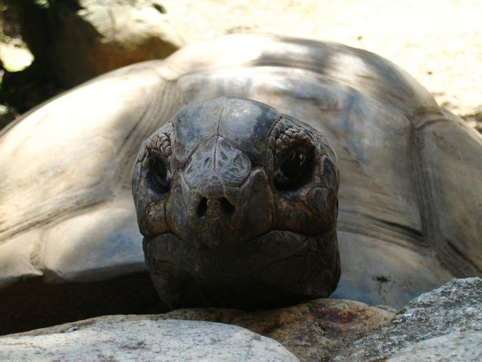 Turtle Seychelles from corsica Tortoise Shell Tortoise Reptile Sea Life Portrait Sea Endangered Species Beach Close-up Wildlife Reserve
