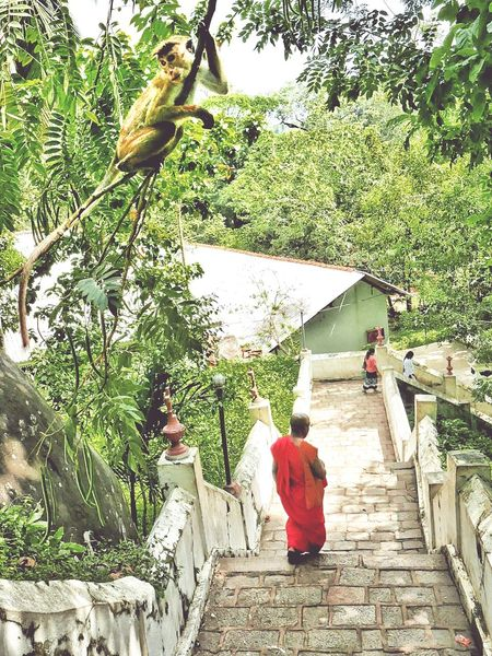Adult People Togetherness Beauty In Nature Green Color Real People Outdoors Travel Photography Sri Lanka Beauty In Nature Buddhism Culture Theworldneedsmorecolors People_and_world Landscape Srilanka Photography Monkeyisland Monkey Temple Stairporn Monks Walk Oranksch People And Places Buddhist Temple Buddha Temple Monk Budhist Prayer Growth