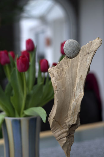 Focus On Foreground Vintage Lens Canon FD 50mm F/1.8 Dof Dancing Red Tulips Woman Angle Bildfolge Close-up Day Door Freshness Motion Nature No People Outdoors Photography Sculpture Selective Focus Wood - Material Indoors