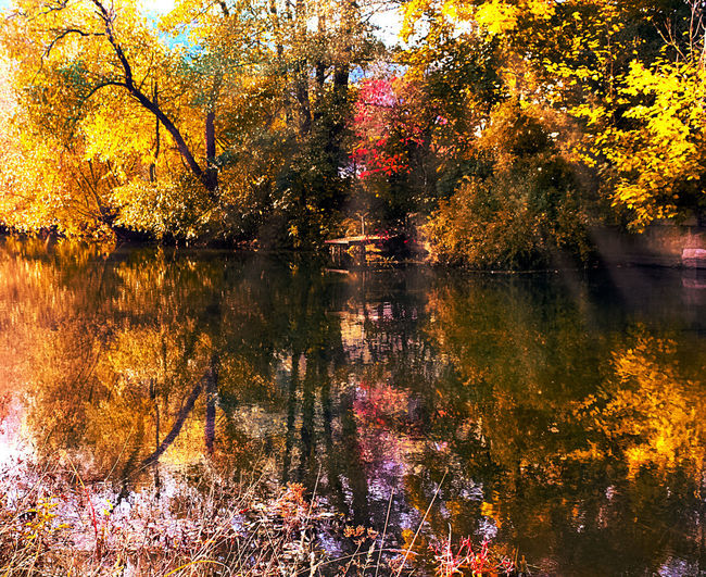 Autumn Beauty In Nature Lake Leaf Nature Reflection Scenics Tranquil Scene Tree