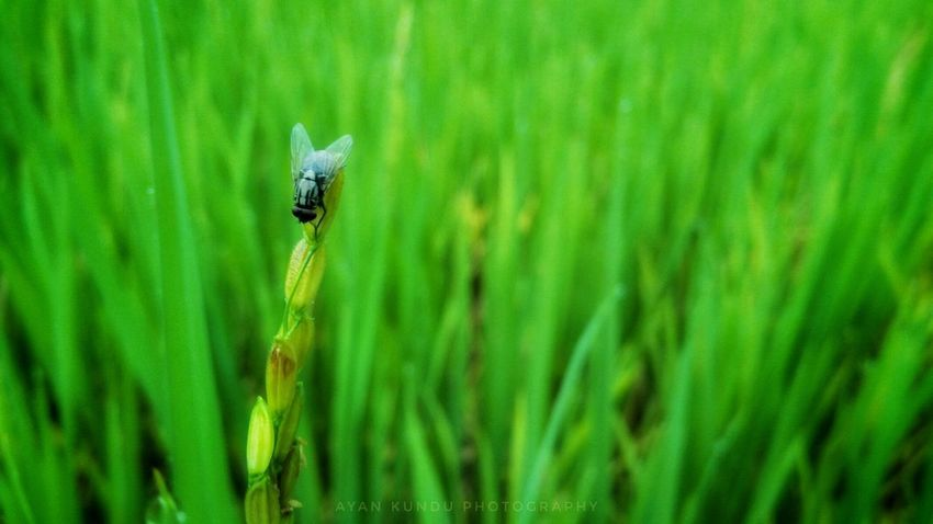 The fly One Animal Green Color Insect Animals In The Wild Nature Day Close-up Grass No People Plant Outdoors Beauty In Nature Freshness Animal Themes Animal Wildlife