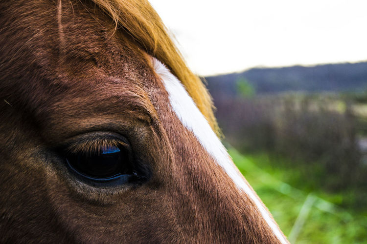 Eye of the horse Good Morning Good Hair Day Nature_collection Naturelovers Nature Photography Natural Beauty Outdoor Photography Walking Around