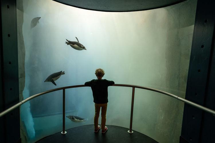 Rear view of man standing in fish tank at aquarium