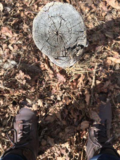 EyeEmNewHere Nature Outdoors Woods Leaves 🍁 Brown Boots Tree Cross Section Inner Power
