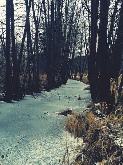 Poland Drawno Winter First Eyeem Photo