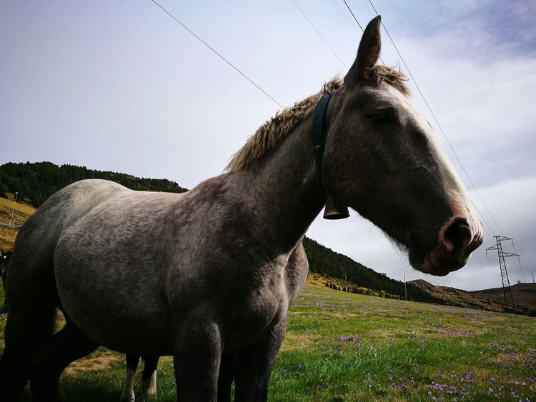 Horse Domestic Animals Rural Scene Livestock No People Outdoors Close-up Nature Animal Themes Andorra🇦🇩 Beauty In Nature