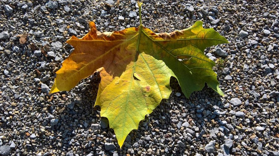 16x9 Autumn Colors Autumn Beauty In Nature Change Close-up Day Dry Fragility Gravel High Angle View Leaf Nature No People Outdoors