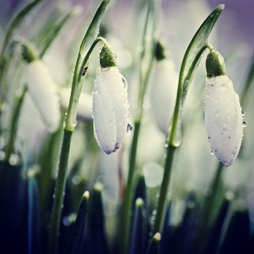 Rainy_day White_flower Instalike Insta_follow_for_the_photo . Insta_share Insta_comment ..
