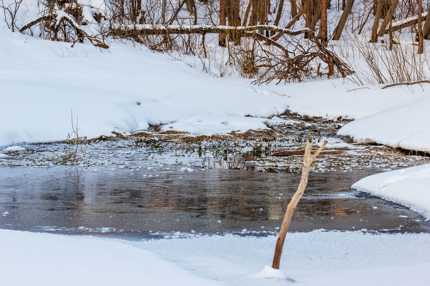 Winter. The Creek flows into the river. Bare Tree Beauty In Nature Cold Temperature Day Ice Landscape Nature No People Outdoors Snow Tranquility Tree Water Winter
