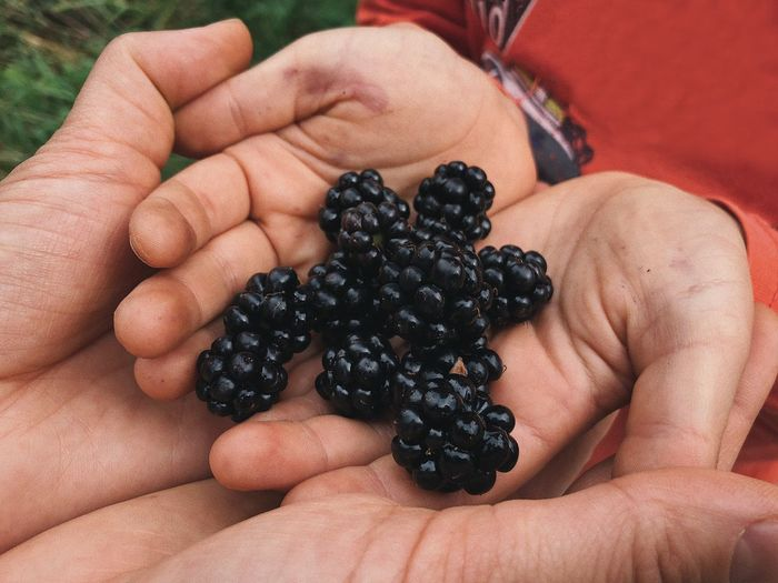 Forest healthy delights... Education Environment Family Gift Palms Delight  Delicious Tasty Blackberries Juicy Forest Fruits Healthy Food Healthy Berry Childhood Berry Fruit Food Human Body Part Healthy Eating Fruit Wellbeing Food And Drink Holding Hand Blackberry - Fruit Finger Body Part Freshness Lifestyles Black Color Moms & Dads