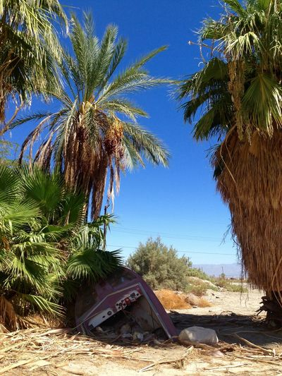 Boat Boats Palm Trees Desert Sand Salton Sea Forsaken Deserted Scapes Destruction Can Be Beautiful Apocalyptic Visions Desert Sky Broken Beauty Deserted Weathered Nature VS Man End Of The World Desert Landscape Desert Beauty Sinking Sinking Ship Sink No Hope