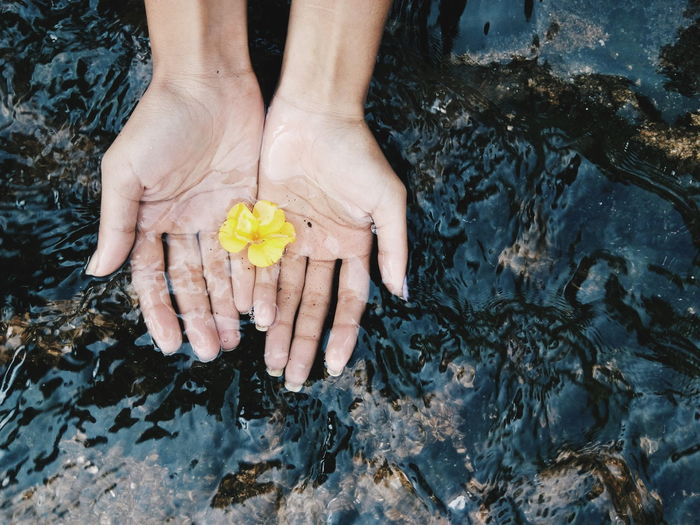 Cropped Hands Of Woman With Yellow Flower In Water