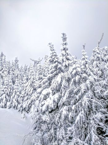 Snow day Tree Winter Snow Mountains Skiing Upstate New York