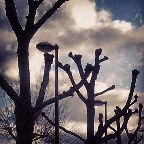 Trees Polardedtrees Streetlamp Streetlamps streetlamplove clouds silhouette silhouettes