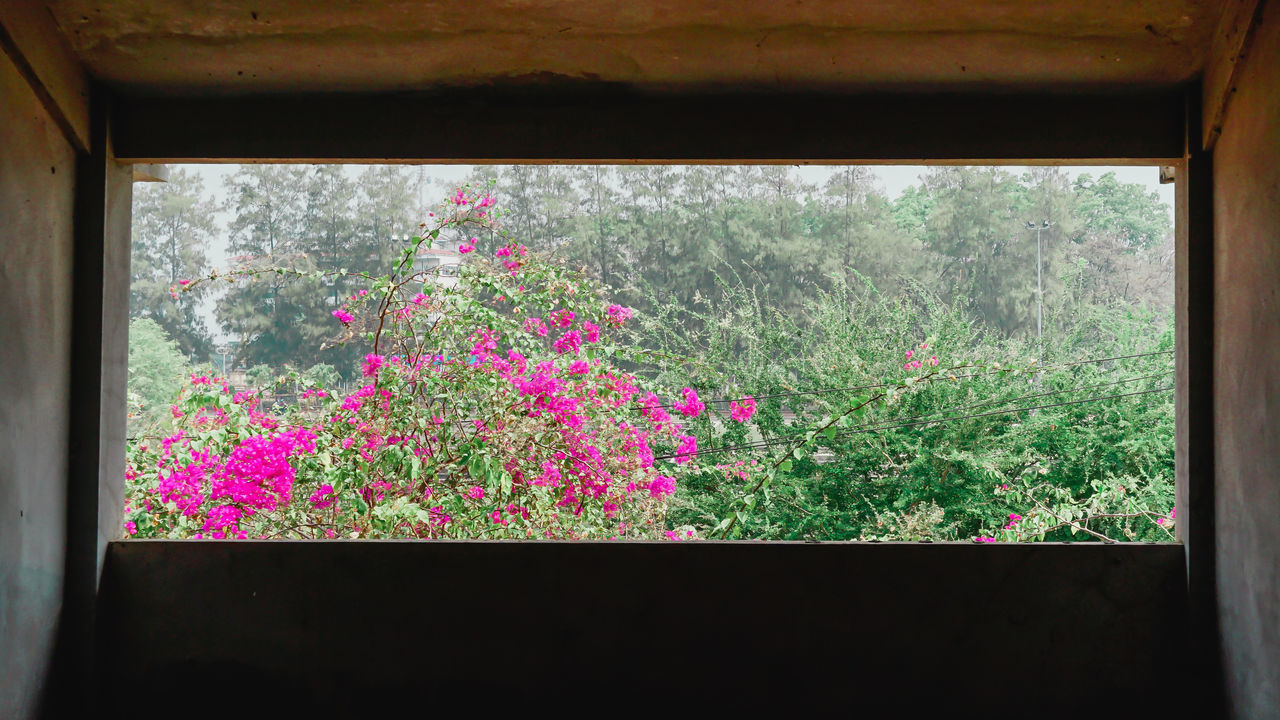 CLOSE-UP OF PINK FLOWERING PLANTS ON WINDOW