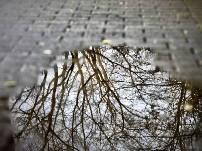 Canon Canonphotography Canon_photos Canon Eos  Canon 18-55 Streetphotography Street Photography Tree Winter Water Snow Snowing Branch Bare Tree Cold Temperature Weather Wet Rainfall Rain