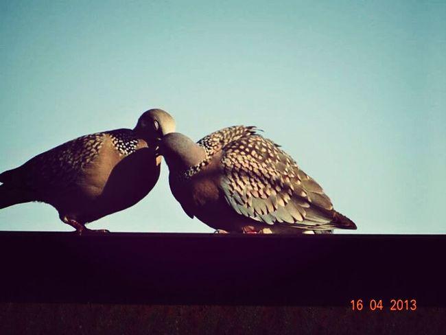 Love Birds Beauty Nature