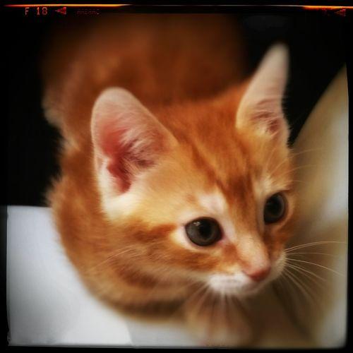 Cat♡ Brown