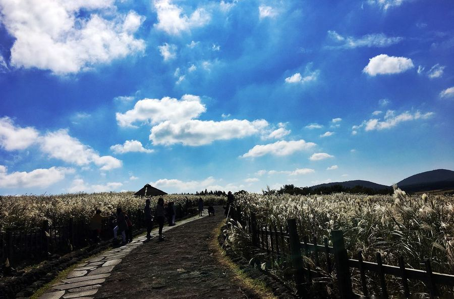 Cloud - Sky Agriculture Sky No People Nature Day Outdoors Beauty In Nature Flower JEJU ISLAND  Sangumburi