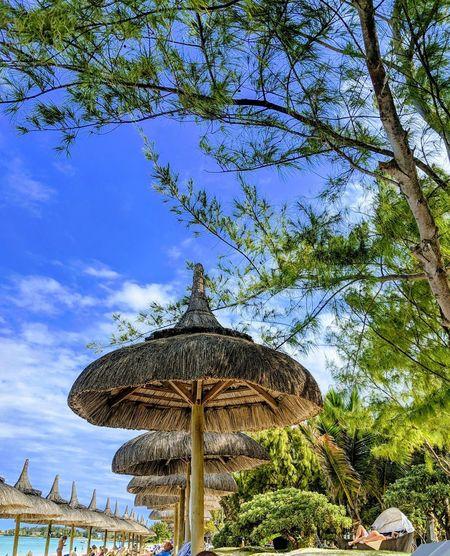 kiosk Beach Holiday Holidays ☀ Seaside Relaxation Relaxing Summer Summer ☀ Summertime Island Island Life Tree Sky