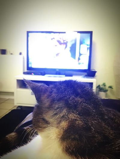 Mimine regarde la télé ?? Animals Animal Chat Catfie CHATFIE Relaxing Mon Ami Le Chat