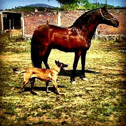 La Vida En El Rancho Es Como Ninguna😉 Sigue Tus Instintos! J.C.C.S.·. Be Unique, Be Free!!J.·.C Horse